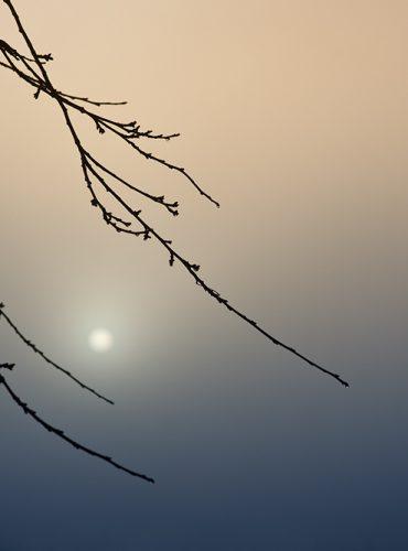 lohwald im nebel